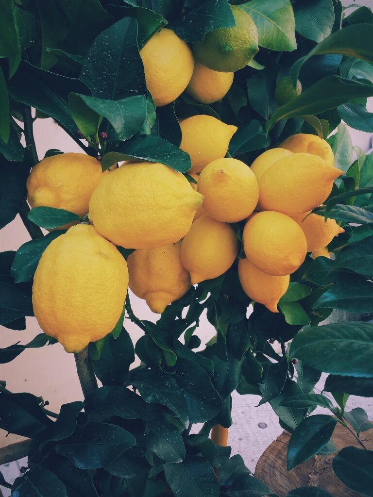 lemon-tree-801996