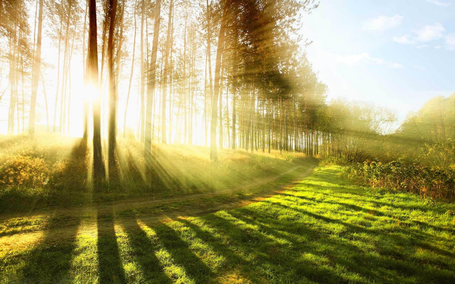 日出,阳光