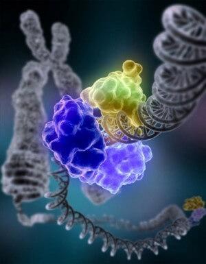 DNA_Repair-e1461744503197
