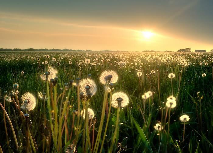 beautiful-sunshine14