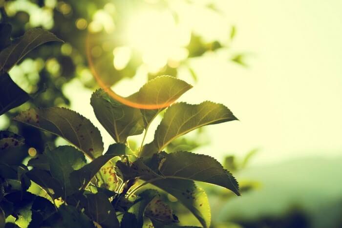 tree-919055_960_720-e1461746028125