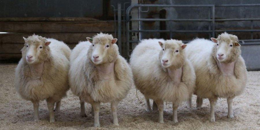 關於複製生物科技 桃莉羊只是一個開始