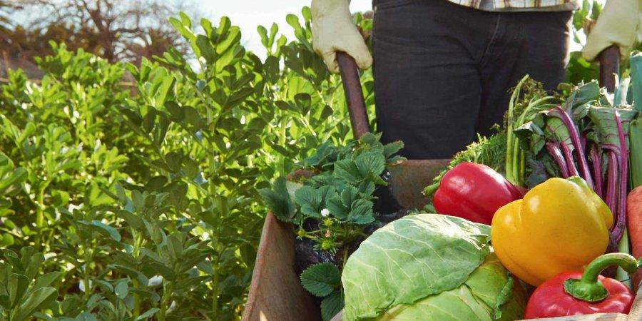 過量農藥易引發慢性疾病 有機農法讓你「食」在安心