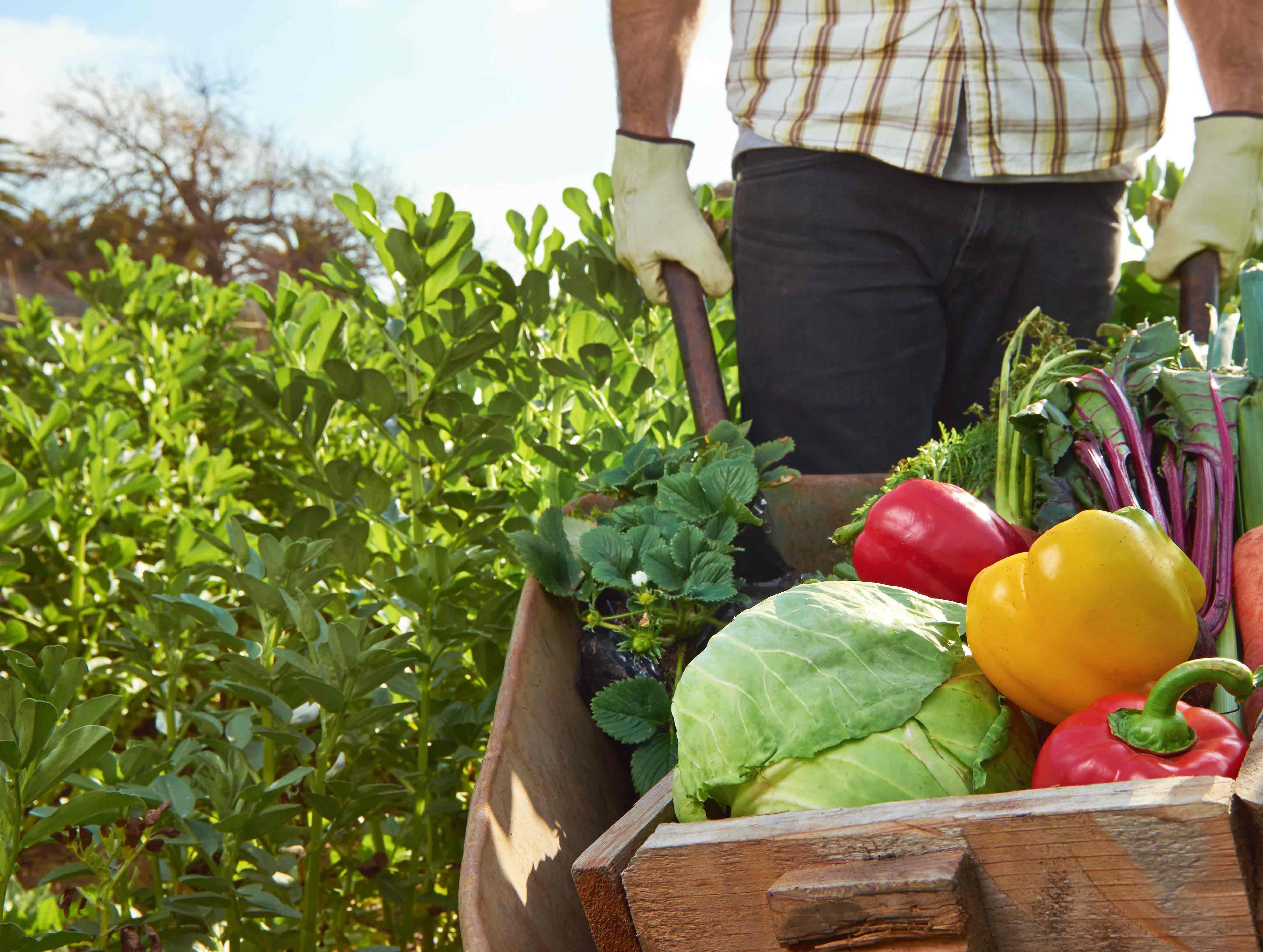 farmer-veggies