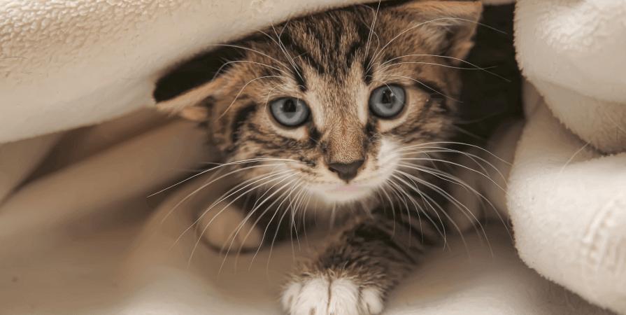 貓咪如何讓你癡狂 ? 原來可能跟寄生蟲有關