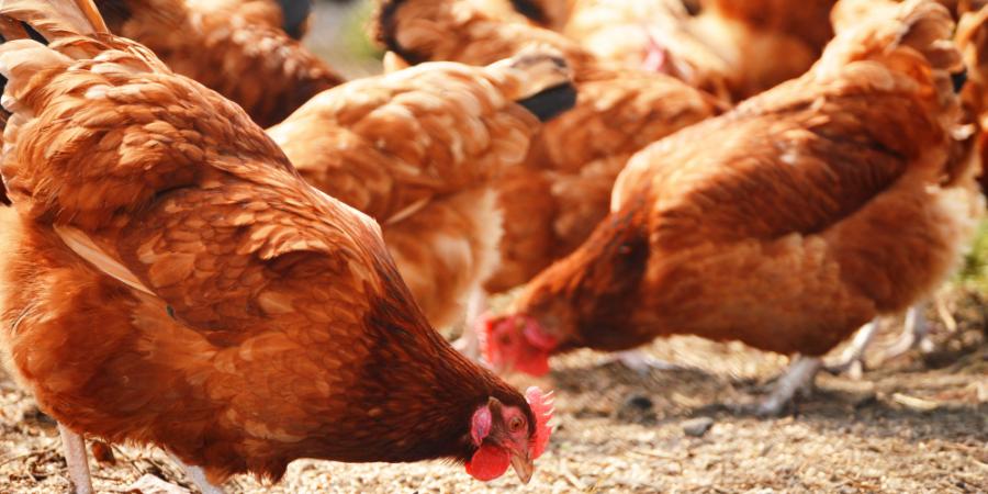 畜牧基因庫:立足台灣放眼國際