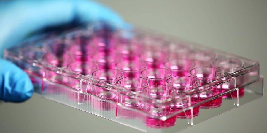 喚醒T細胞 免疫療法為癌症患者帶來希望