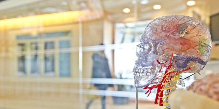 用「腦」增強免疫力?科學家發現免疫系統調控與大腦有關