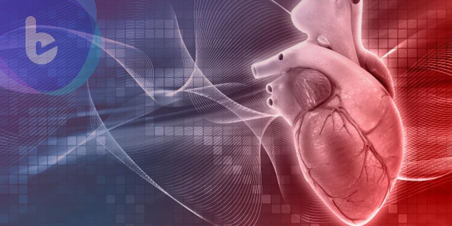 用植物脈管當血管,科學家用菠菜葉做出心臟組織