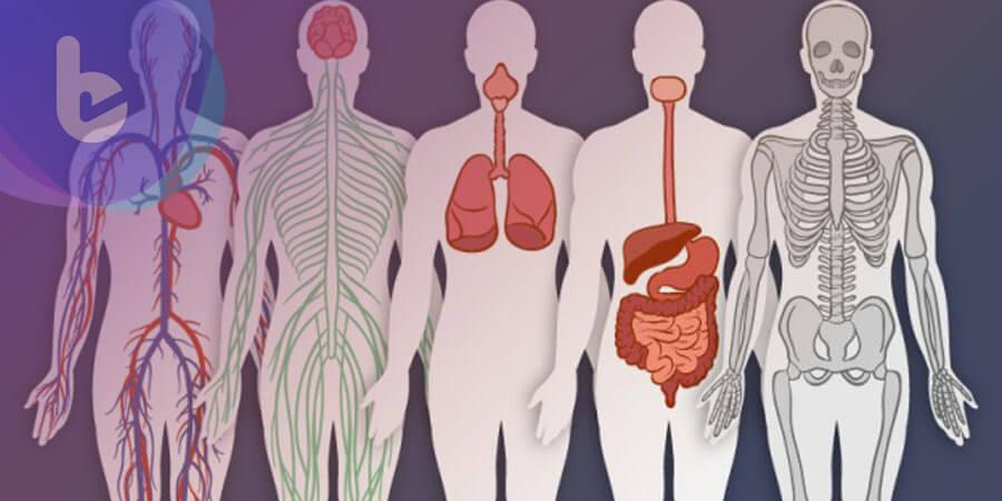 挑對時間吃飯 擺脫脂肪肝