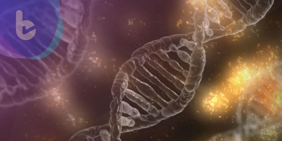澳洲科學家透過基因修飾根治過敏反應