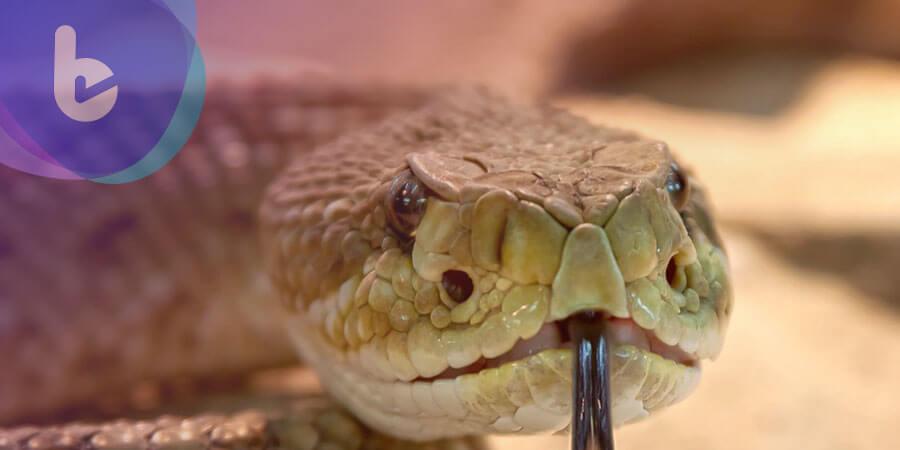 蛇毒變新藥 黃斑部病變、癌症免驚
