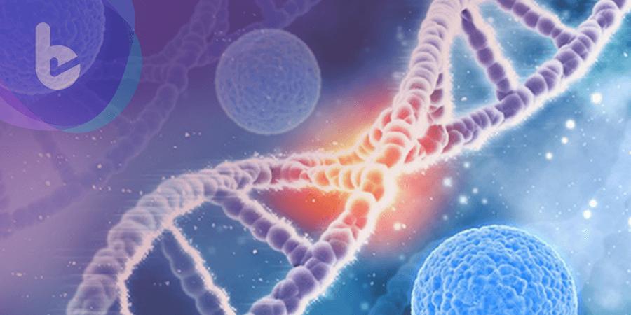 美研究IKZF1為禿頭基因 也能提升免疫治療