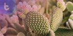 比墨西哥辣椒辣450萬倍的植物 ,或許能製成超強止痛劑!