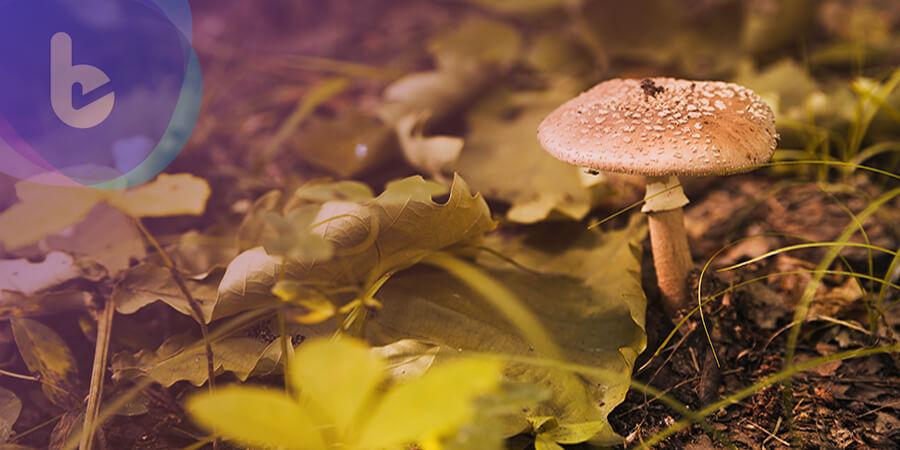 這樣「肝」好! 「香菇菌絲體」保護肝功能