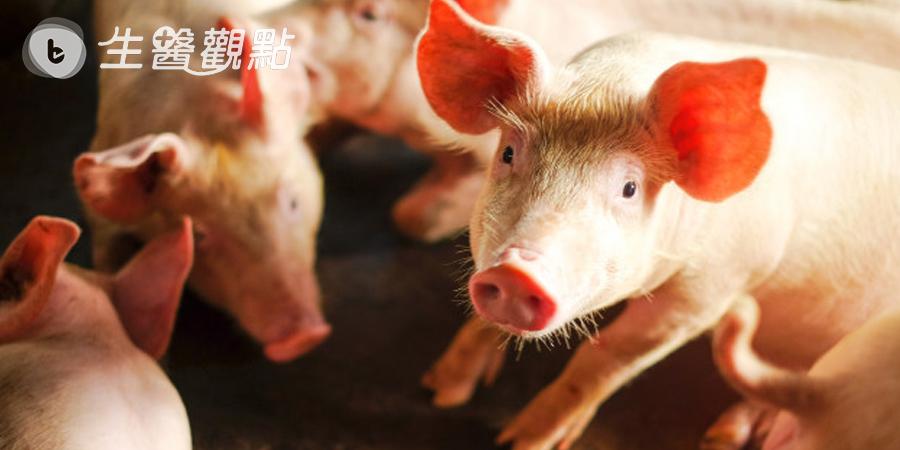 台灣研發非洲豬瘟「快篩試劑」  為亞洲第一支獲OIE認證