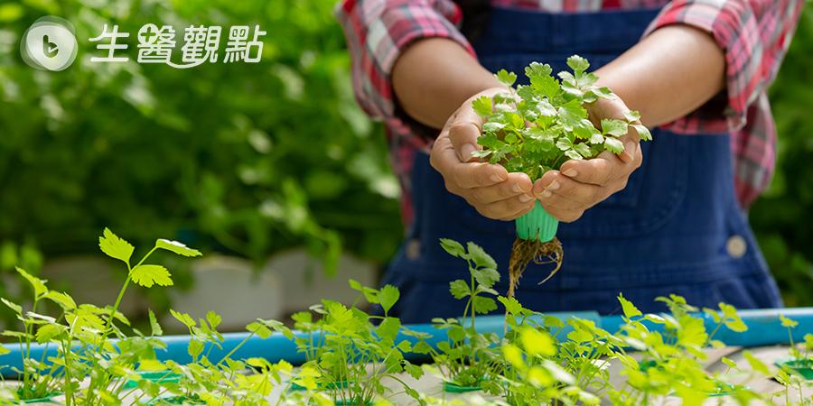響應422 Earth Day 一起種菜愛地球