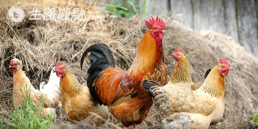 |健康提案|超簡單雞胸肉料理!
